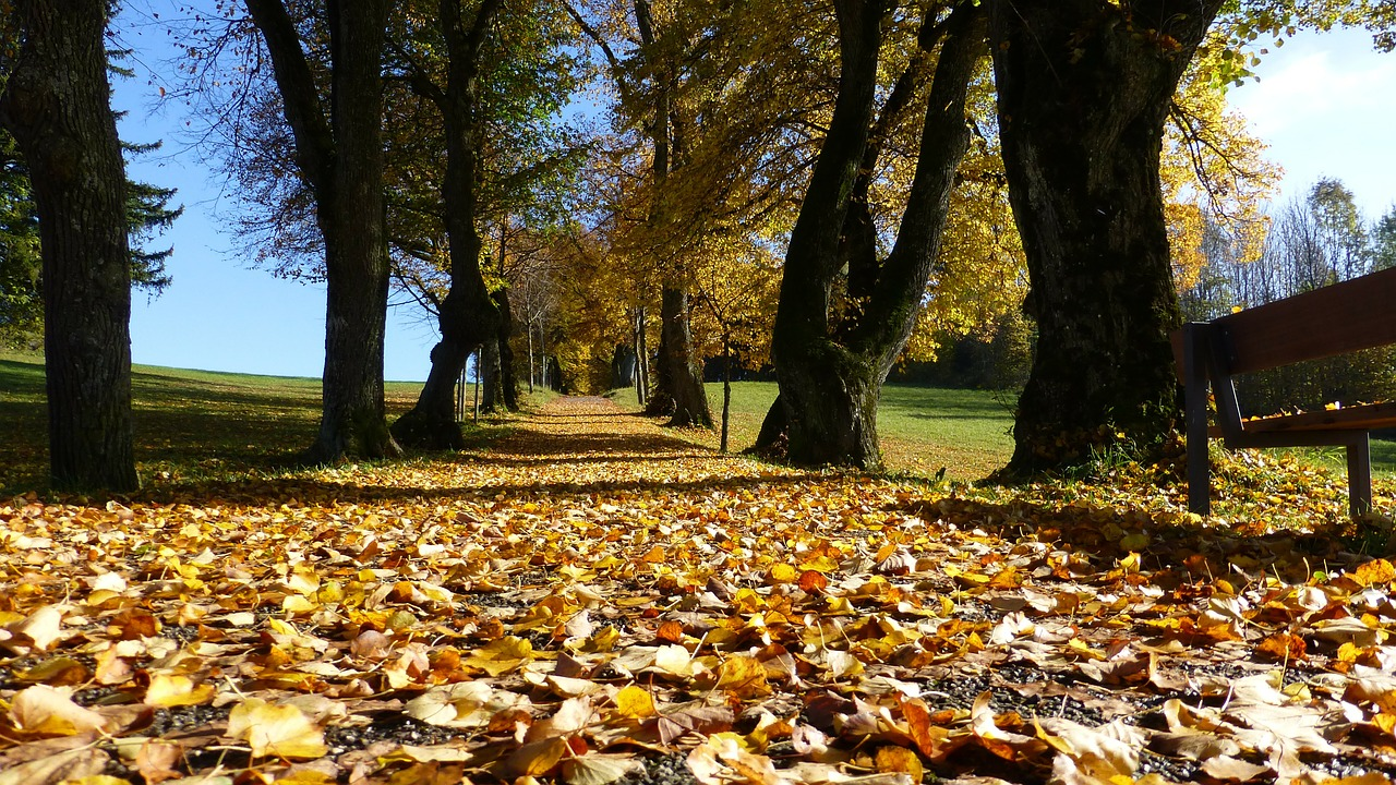 Tree Services and Care, Arlington Heights, IL