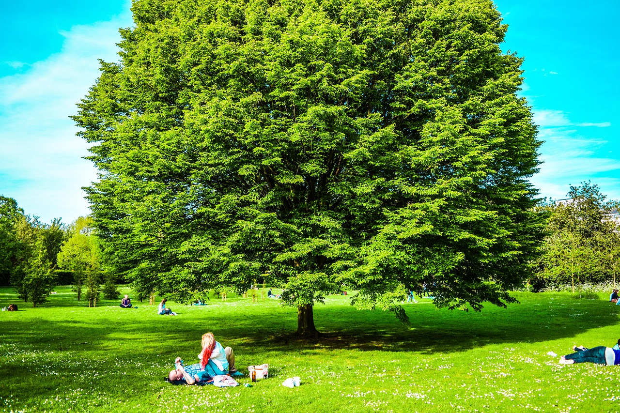 Tree Services and Care, Palatine, IL