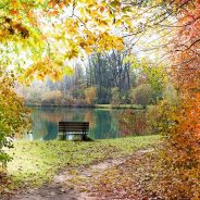 Tree Care and Maintenance for the Fall Season