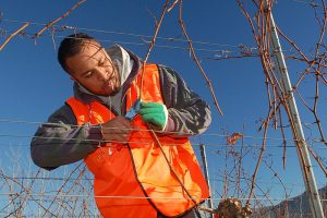 Why Winter Pruning is Important