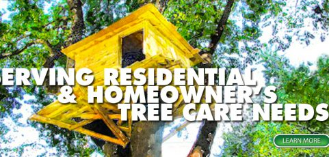 Serving Residential & Homeowner's Tree Care Needs
