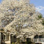 Tree Pruning Tree Trimming, Palatine, IL