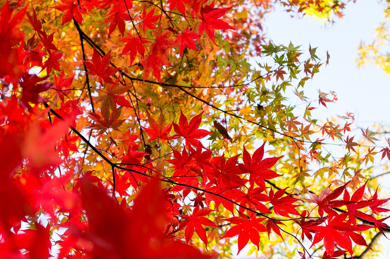 Tree Services and Care, Mount Prospect, IL