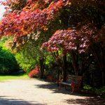 Tree Treatment Northbrook, IL