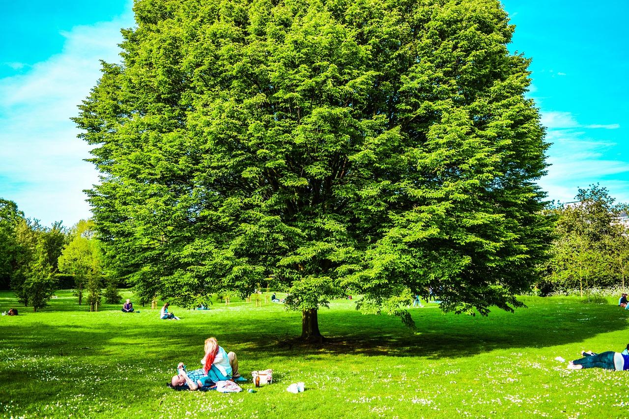 Tree Treatment, Vernon Hills, IL