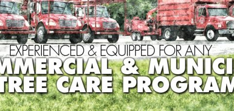 Experienced & Equipped for Any Commercial & Municipal Tree Care Program