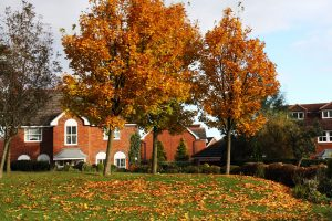 Tree Care and Maintenance Fall Season