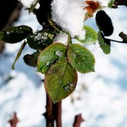 The Importance of Pruning your Shrubs in the Winter