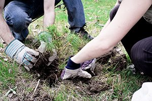 Tree Planting – Park Ridge, IL