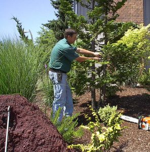 Find a reliable tree care service provider