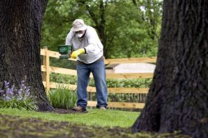 Tree Pruning Services for Glenview, IL  Hendricksen Tree Care