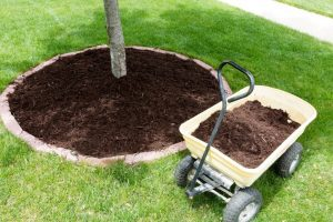 Tree Care in Chicagoland