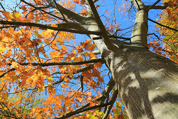 Tree Maintenance and Treatments in Northbrook, IL