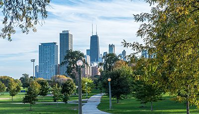 Common Types of Trees in Chicago, IL & Northwest Suburbs