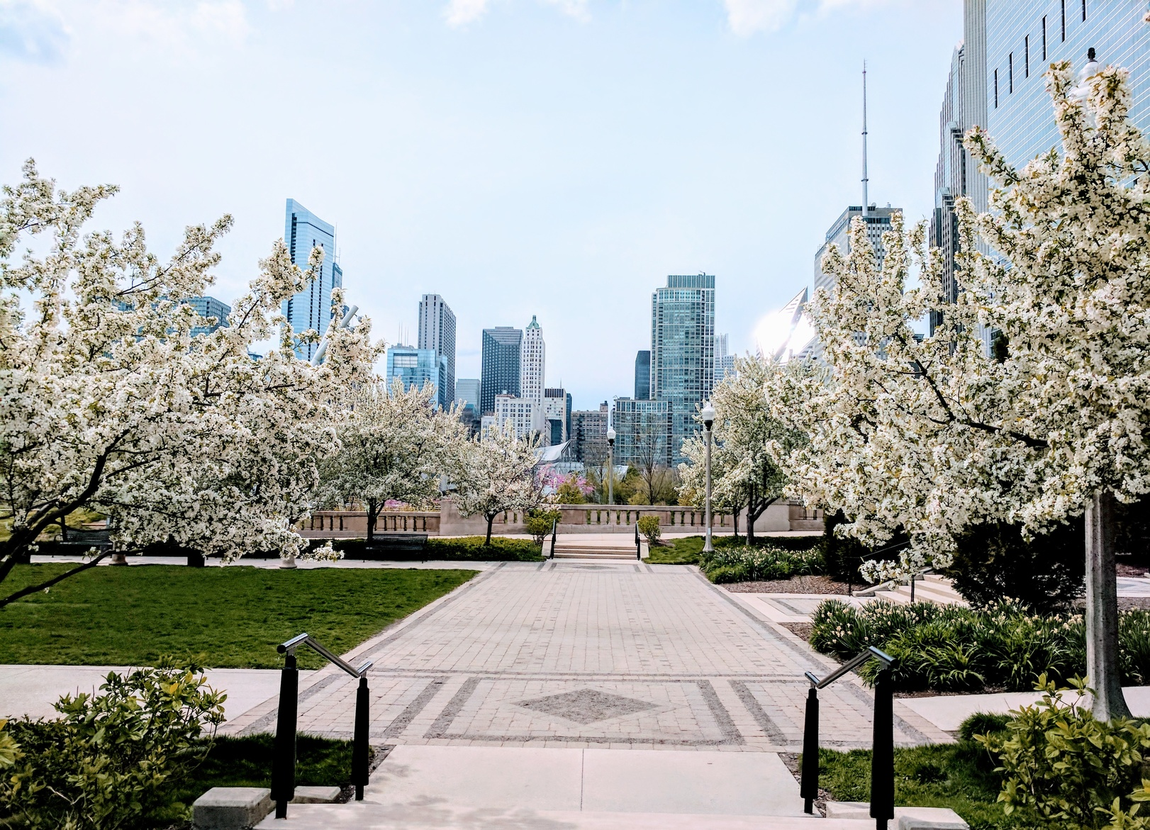 Types Of Flowering Trees You Will See This Spring In The Chicago