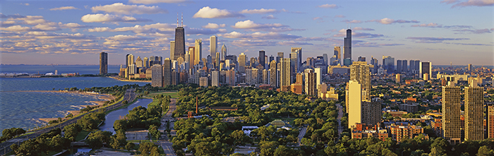 types-of-tree-species-in-chicago-il-suburbs