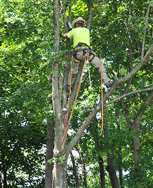 emeraldemerald-ash-borer-disease-control-arlington-heights-il-ash-borer-disease-control-arlington-heights-il