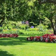Best Summer Shade Trees for Landscaping a Chicagoland Yard