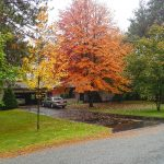 Tree Pruning for Winnetka, IL