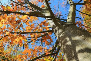 Tree Treatments for Highland Park, IL