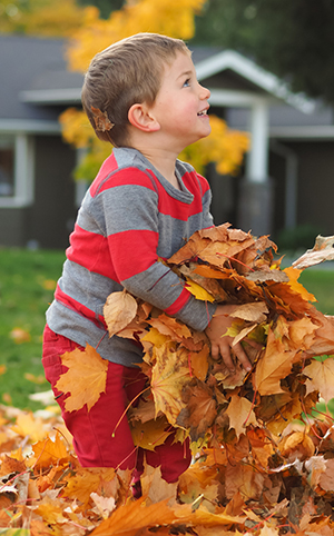 Boy playing in yard in Arlington Heights, IL - Maple leaf pile