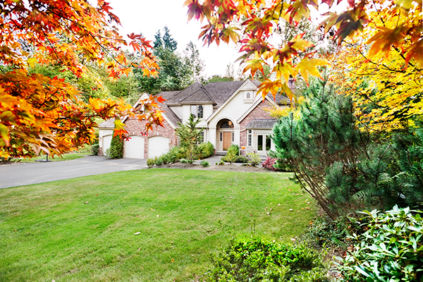 northbrook-il-maple-tree-landscaping