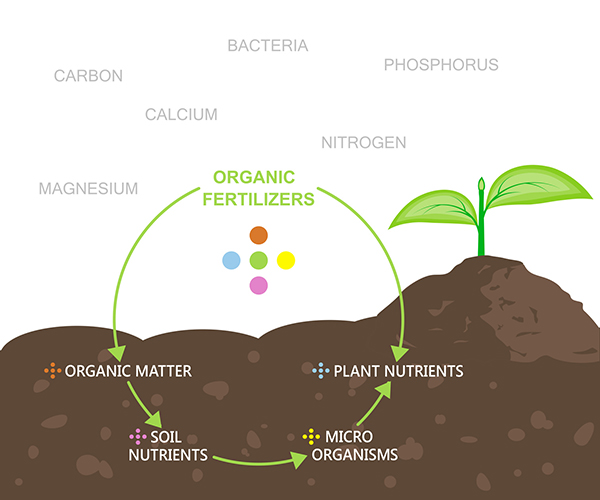 Nutrients in plant fertilizer - Diagram infographic