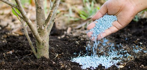The Homeowner's Guide to How and When to Fertilize Trees