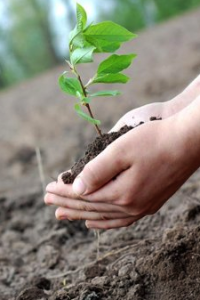 Tree Planting Services for Wilmette, IL