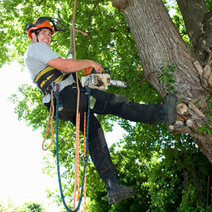 Tree and Stump Removal in Wilmette, IL