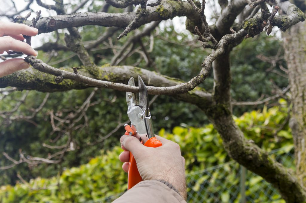 best-time-to-prune-trees-chicagoland-illinois
