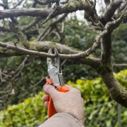 The Importance of Winter Tree Pruning