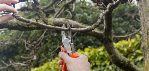 Winter is the Best Time of the Year to Prune Your Chicagoland Trees