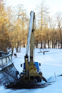 commercial-winter-tree-pruning-chicago-il-parks-forests
