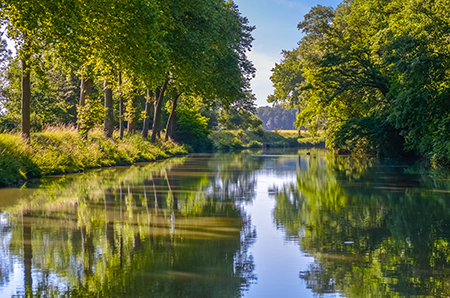 Sycamore trees along a river bank. Consider planting one of these large shade trees in your landscape today!