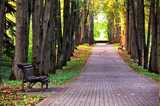 park-lined-with-basswood-trees