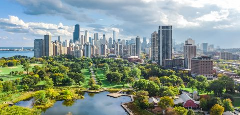 Common Tree Diseases and Insect Pests Found in Chicago, IL and the Northwest Suburbs