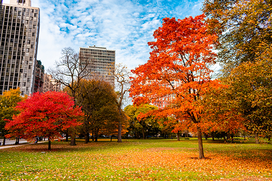 plant-trees-in-autumn-chicago-il