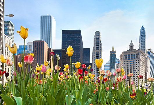 plant-trees-in-spring-chicago-il