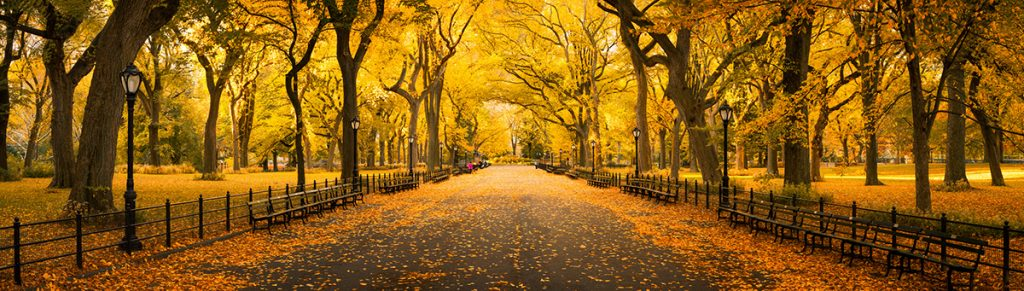 fall-foliage-in-central-park-new-york-city