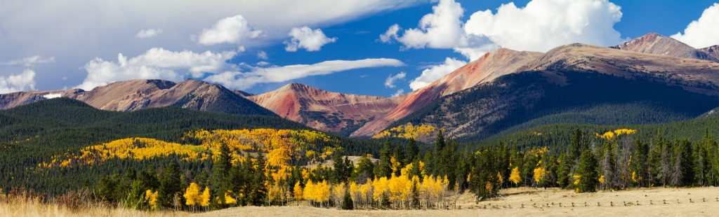 fall-leaf-colors-aspen-co