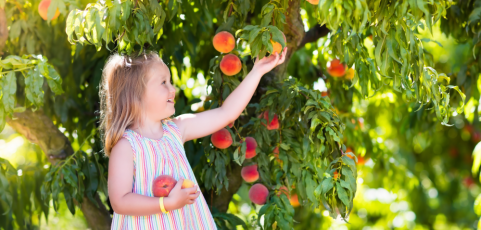 Which Fruit Trees Grow Best in Illinois and How to Care for Them