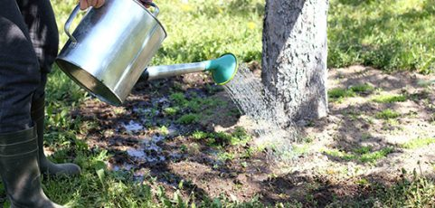 Tips to Effectively Water Your Trees