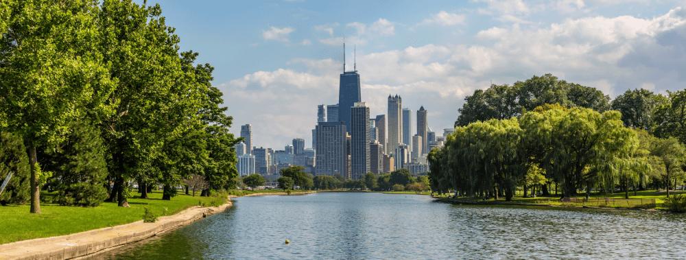 verticillium-wilt-chicago-il-summer-min